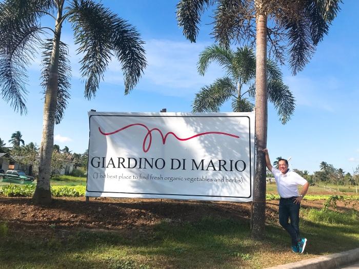 Lettuce Garden of Mario Babes Oreta inMario Mio Tagaytay